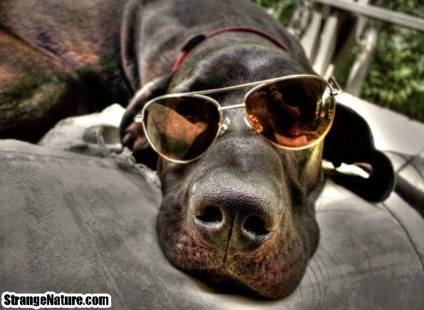 funny animals in glasses 3