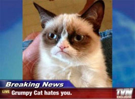 funny-picture-grumpy-cat-hates-you1